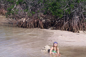 swim in the mangroves in the florida keys