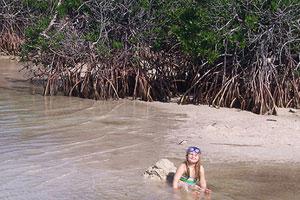 swim in the mangroves in the florida keys