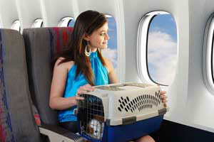 travel with pet on airplane