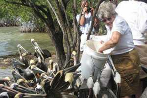 florida keys wild bird rehab center